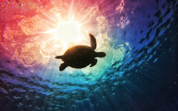 1 Turtle sunburst