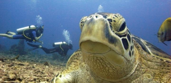 Green Turtle Open Water Training Dive