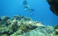 Turtle Heaven Gili Air