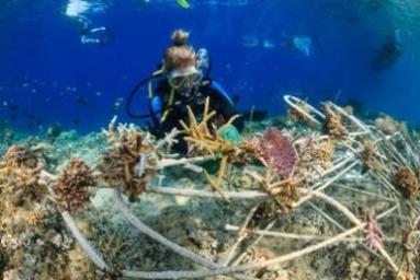How to make your holiday even more meaningful manta dive resort gili air - Gili air manta dive ...