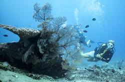 Air wall all levels manta dive resort gili air - Gili air manta dive ...