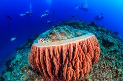 Gili islands dive sites clickable map manta dive resort gili air - Gili air manta dive ...