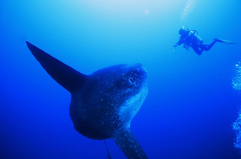 Fish id manta dive resort gili air - Manta dive gili air resort ...